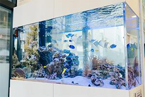 目白マリア歯科待合の色とりどりの熱帯魚が泳ぐアクアリウム