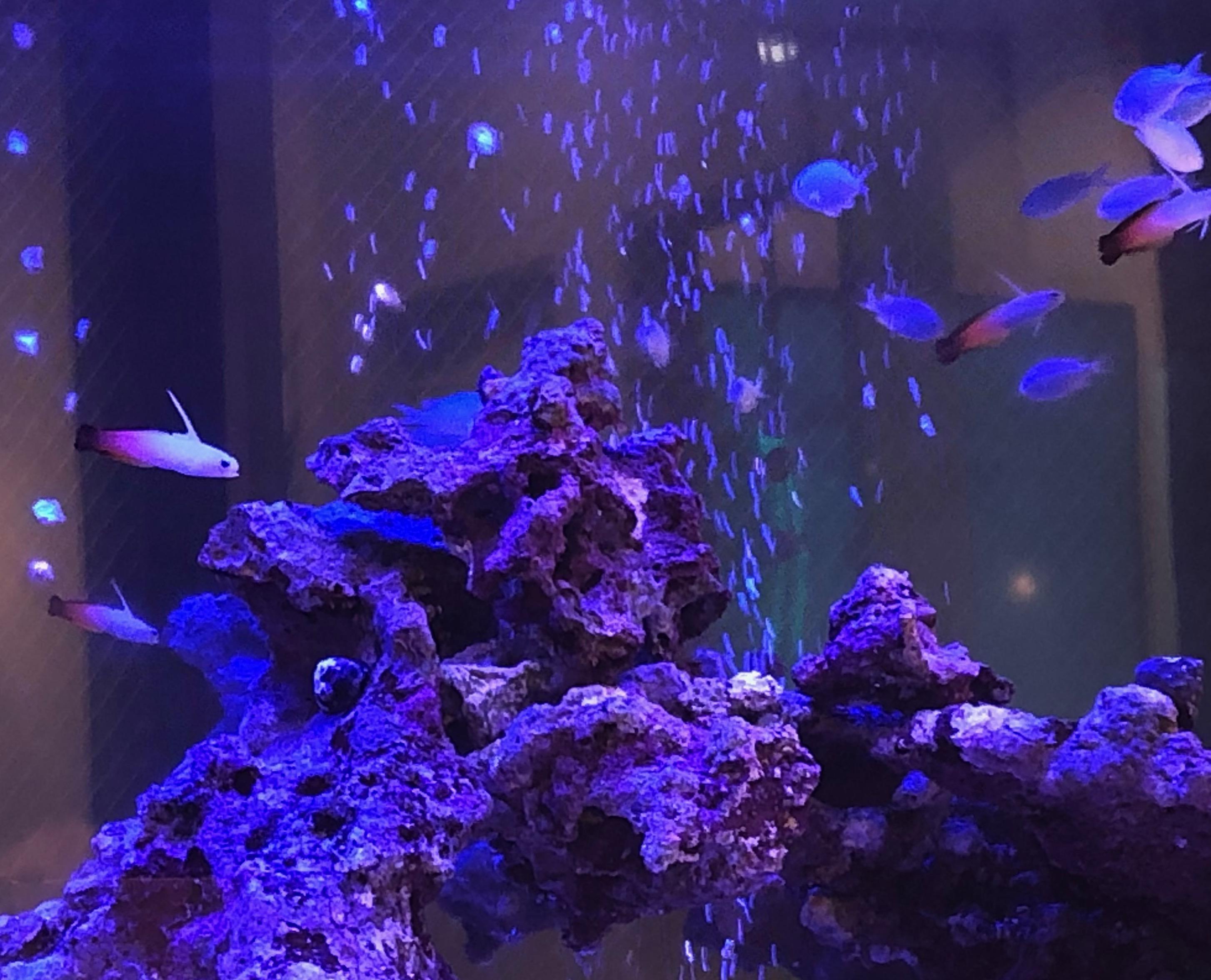 目白マリア歯科のアクアリウムでたくさんの美しい熱帯魚が泳ぐ画像